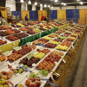 Apple contest winners at North Carolina State Fair