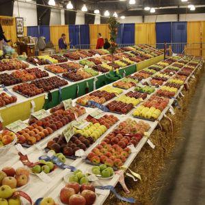 Apple contest winners at North Carolina State Fair