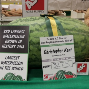 Prize-winning watermelon at North Carolina State Fair, 2018