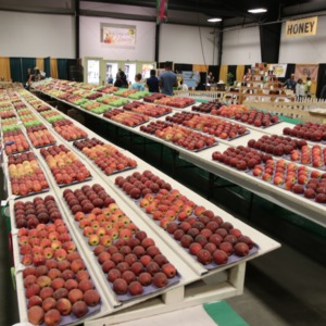 Apples on display at North Carolina State Fair, 2018