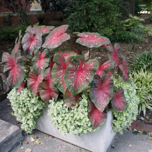 Colorful Plant At Reynolds Coliseum