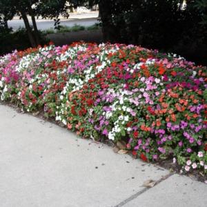 Flowers At Reynolds Coliseum