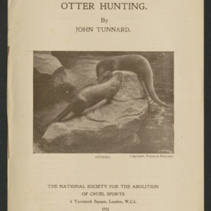 Slaughter of beauty: otter hunting