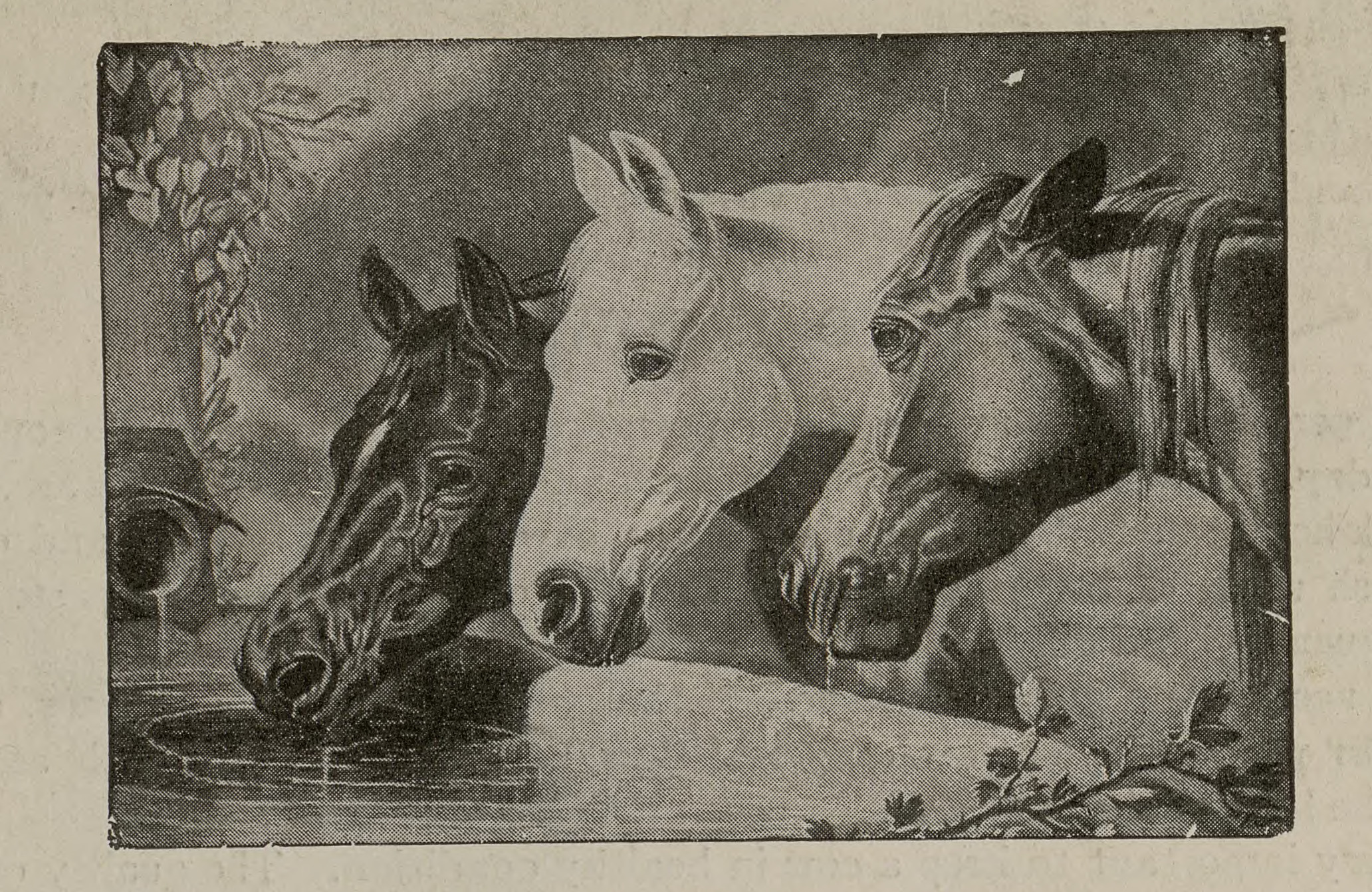 """Horses from """"Ways of Kindness,"""" which was intended to teach children about ways to be kind to animals in their daily lives. From the John Ptak Collection of Animal Rights and Animal Welfare Printed Education Materials."""