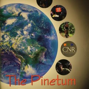 Pinetum, 2007