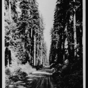 On the Road to Lake Quinault