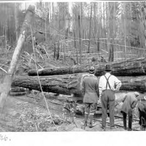 First Initiation of Western Logging