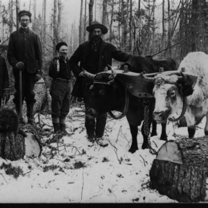 Sledding Jack Pine With Oxen