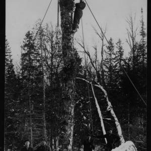 Goodyears Overhead Skidder