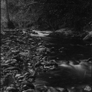 Big Creek in Pisgah Forest, 1897