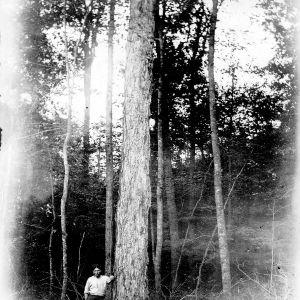 A Big Birch