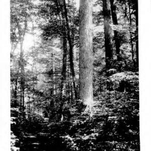 Beauty Spot in the Woods