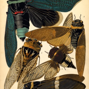 Insectes. Plate 1