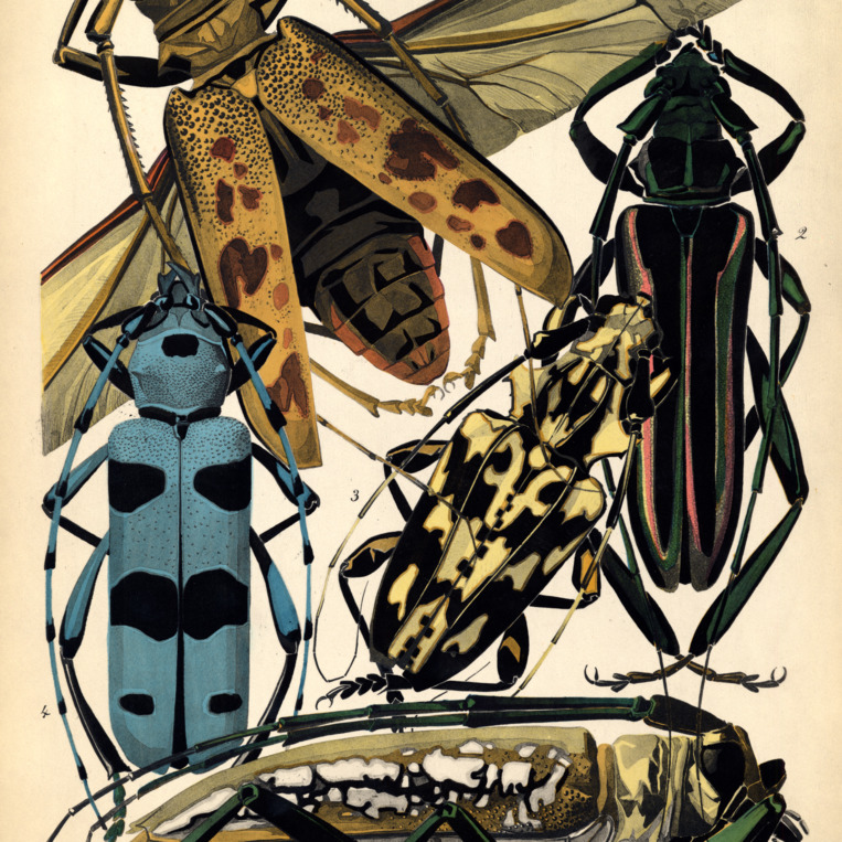 Insectes. Plate 3
