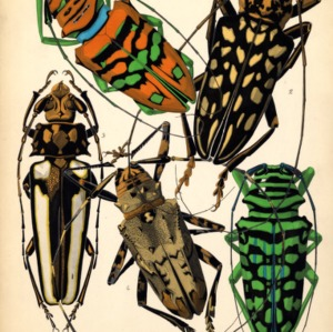Insectes. Plate 4