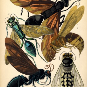 Insectes. Plate 6