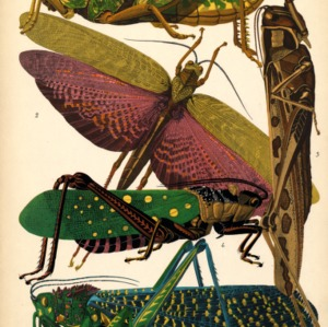 Insectes. Plate 7