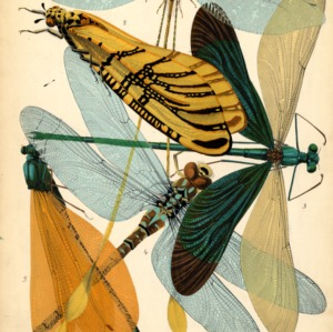 Insectes. Plate 9