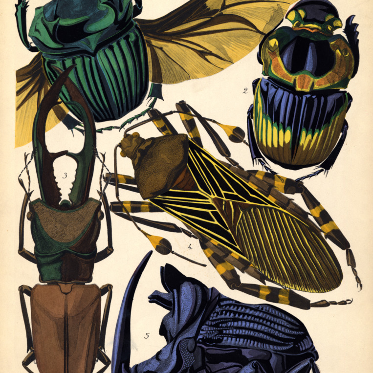 Insectes. Plate 15