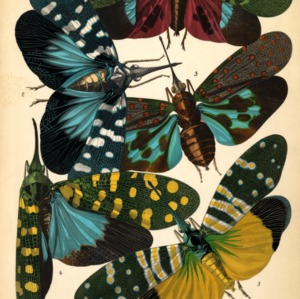 Insectes. Plate 16
