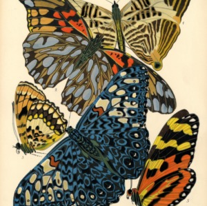 Papillons. Plate 3