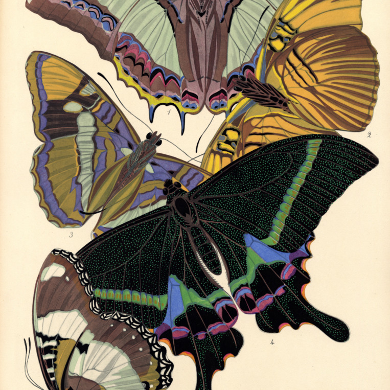 Papillons. Plate 8