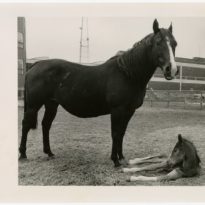 A horse and her foal