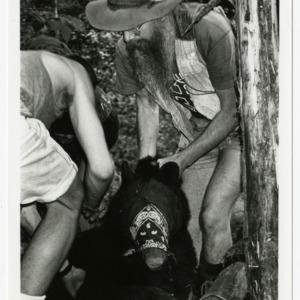 NCSU researcher tags black bear