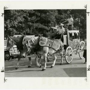 Horses pull carriage during Benson Mule Days