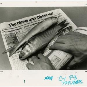 Fish on newspaper
