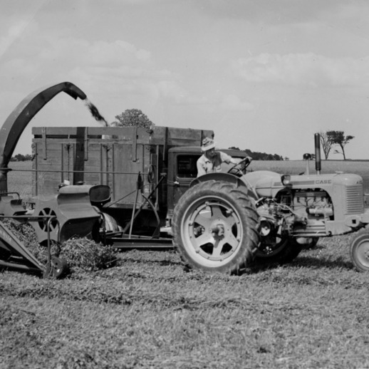 Agricultural machinery harvesting green alfalfa