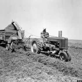 Agricultural machinery harvesting alfalfa