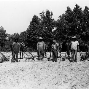 Men with horse-drawn agricultural machinery in field