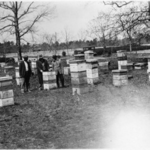 Apiary of Paul A. Ervin