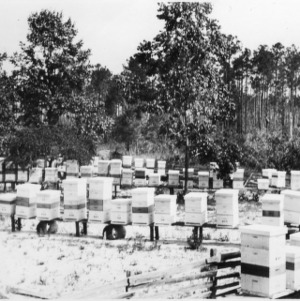 Apiary of D. G. Kelly