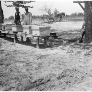 Bees in original stand of apiary