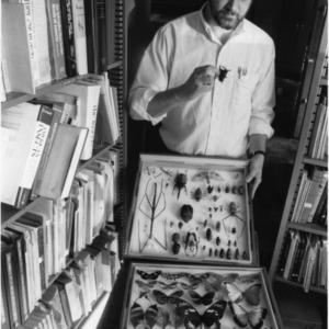 Dr. Lewis Deitz displaying a portion of the extensive NCSU insect collection