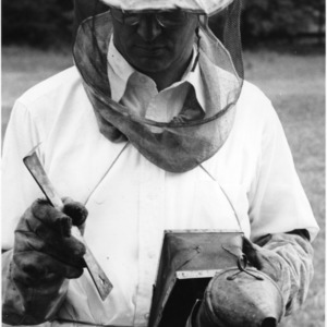 Beekeeper in protective clothing and equipment