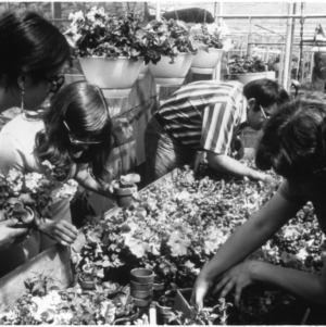 Group with flowers in greenhouse