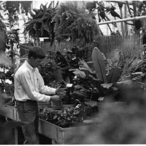Man examining plants in greenhouse
