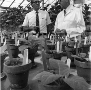 Guy Gooding and George B. Lucas with potted plants in greenhouse