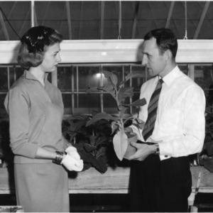 Barbara Turner and Dr. J. L. Apple in tobacco greenhouse