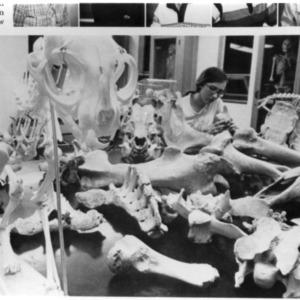 Woman examining animal bones