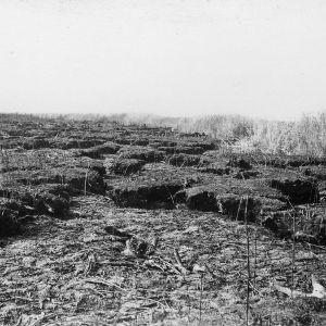 Burnt peat soil