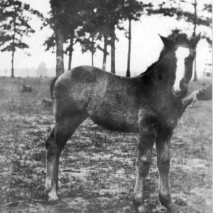 Foal named Mary