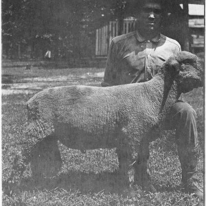Man with Hampshire ram