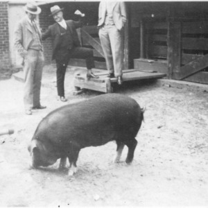 E. H. Hostetler and George Templeton with pig at Swine Research Farm
