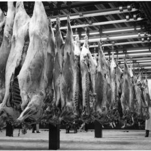 Animal Carcasses