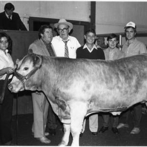 Beef Cattle Judging