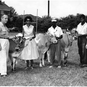 Livestock Competition Winners, 1955